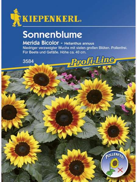 Sonnenbl. Merida Bicolor NE