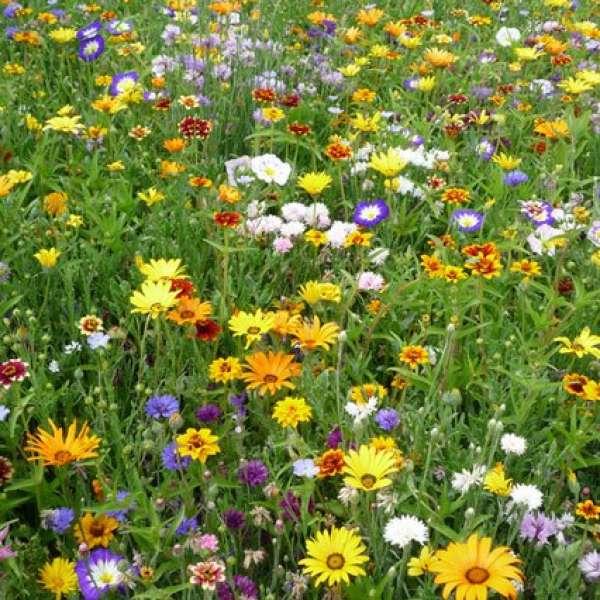 Kiepenkerl Amerikanische Landblumenmischung 40g