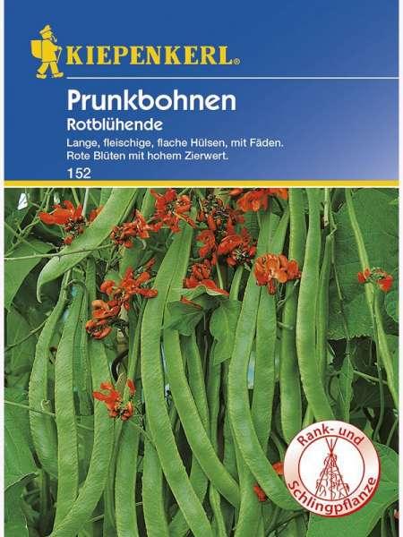 Kiepenkerl Prunkbohnen Rotblühende