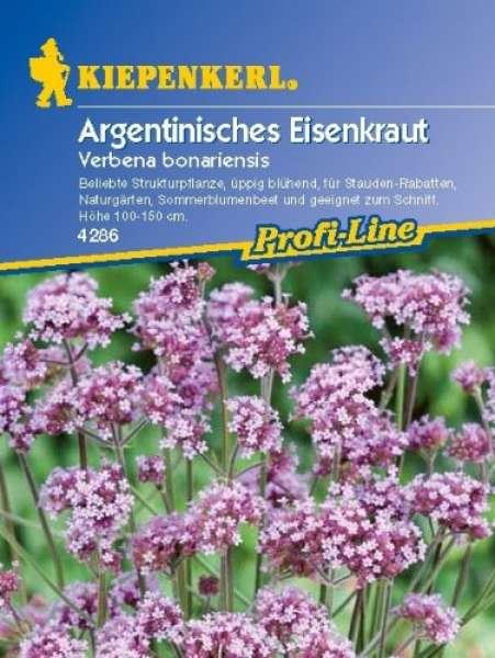 Kiepenkerl Argentinisches Eisenkraut, Verbena bonariensis