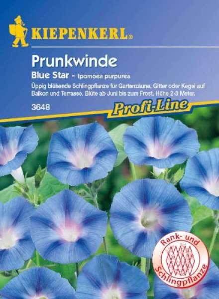 Kiepenkerl Prunkwinde (Ipomoea) Blue Star