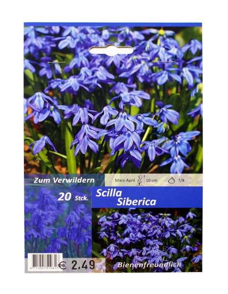 Blaustern Scilla Siberica