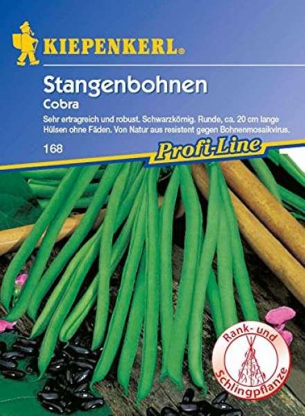 Kiepenkerl Stangenbohne Cobra