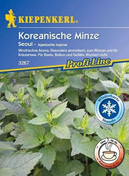 Koreanische Minze Seoul