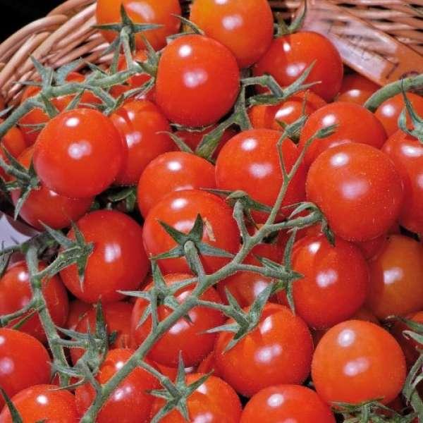Kiepenkerl Cherrytomate Philovita