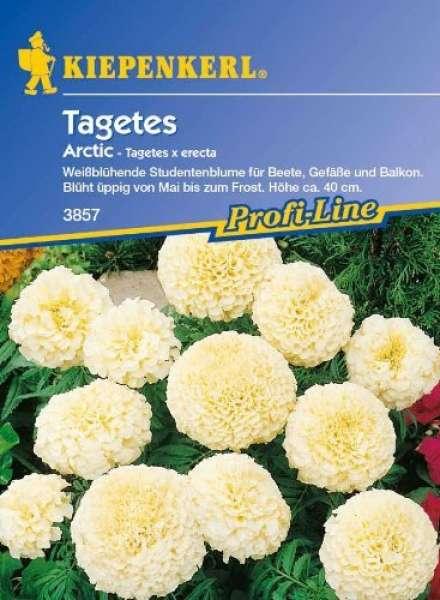Kiepenkerl Tagetes Arctic