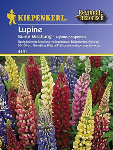 Kiepenkerl Lupinen Bunte-Mischung, Lupinus polyphyllus