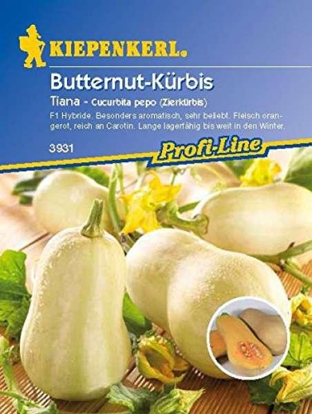 Kiepenkerl Butternut-Kürbis Tiana - cucurbita pepo