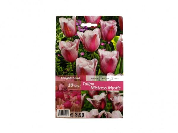 Tulipa Mistress Mystic