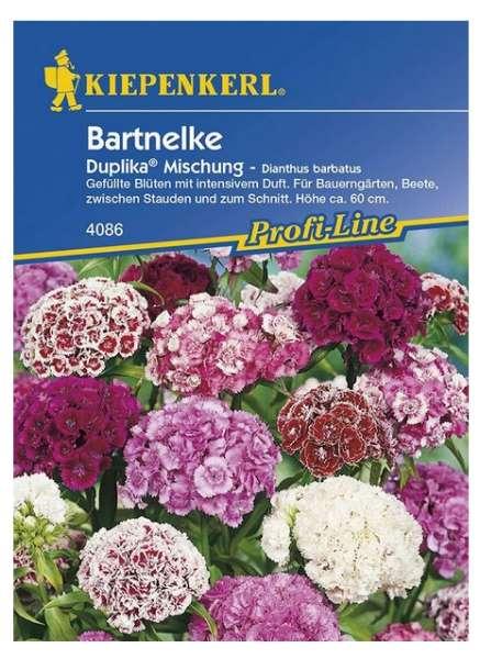 Dianthus gef.blü.Duplika