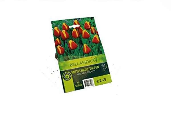 Bellandris Mittelfrühe Tulpen Gelb / Rot