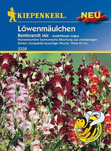 Kiepenkerl Löwenmäulchen Rembrandt Mix
