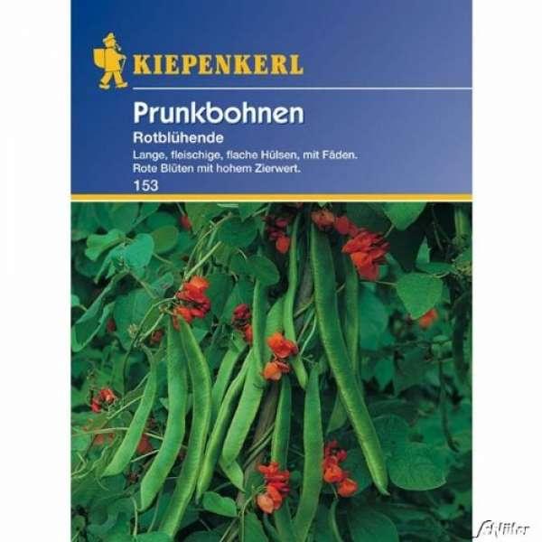 Kiepenkerl Bohne Prunkb. rotblühende
