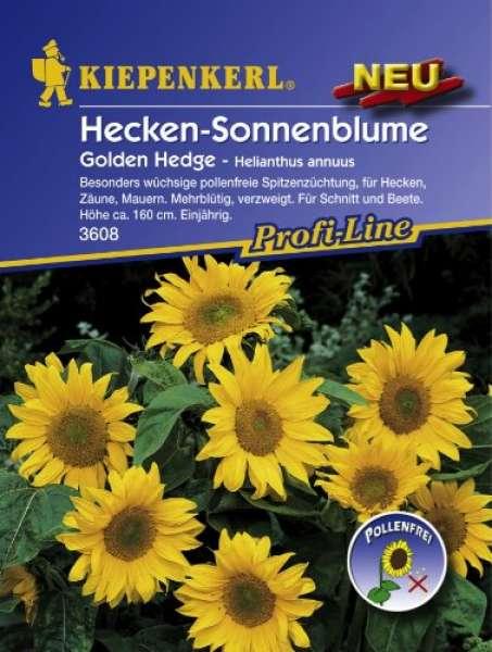 Kiepenkerl Hecken-Sonnenblume, Golden Hedge - Helianthus annuus