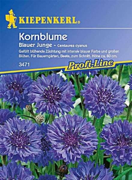 Kiepenkerl Kornblume Blauer Junge