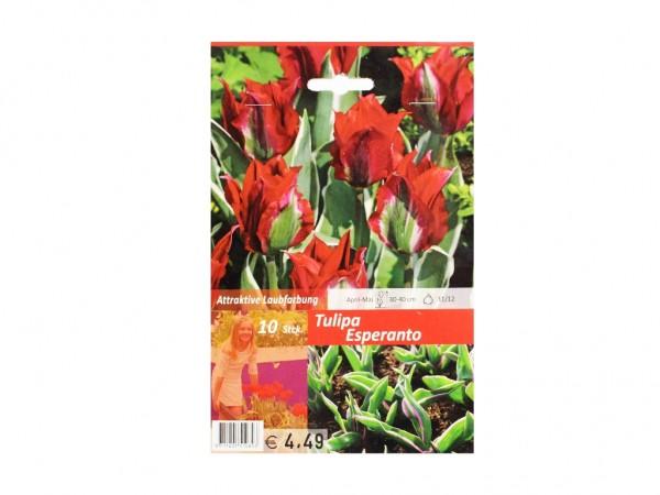 Tulipa Esperanto