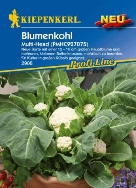 Blumenkohl Multi-Head NE