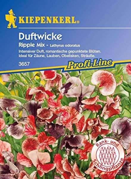 Kiepenkerl Lathyrus Ripple Mix