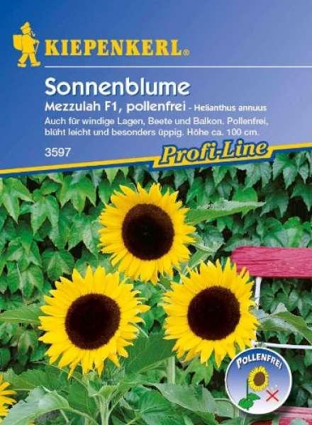 Kiepenkerl Sonnenblume Mezzulah