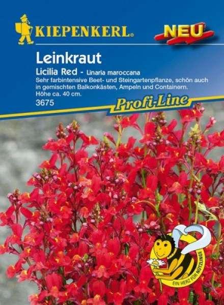 Leinkraut Licilia Red
