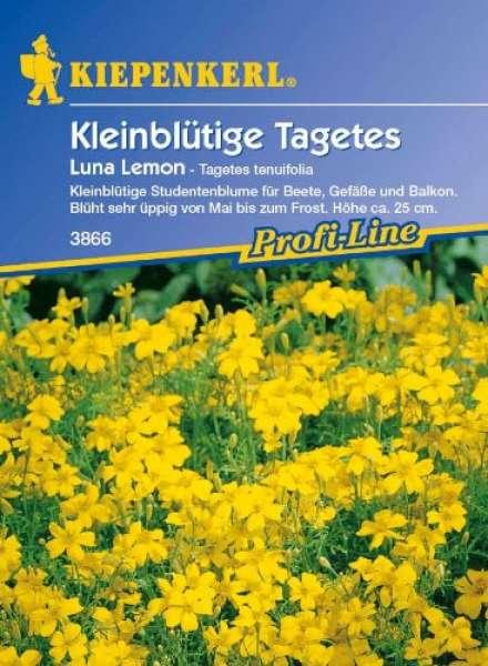 Kiepenkerl Kleinblütige Tagetes lemon