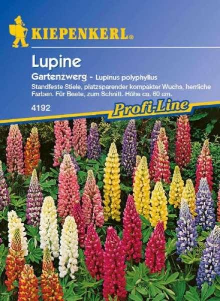 Kiepenkerl Lupine Gartenzwerg - Lupinus polyphyllus
