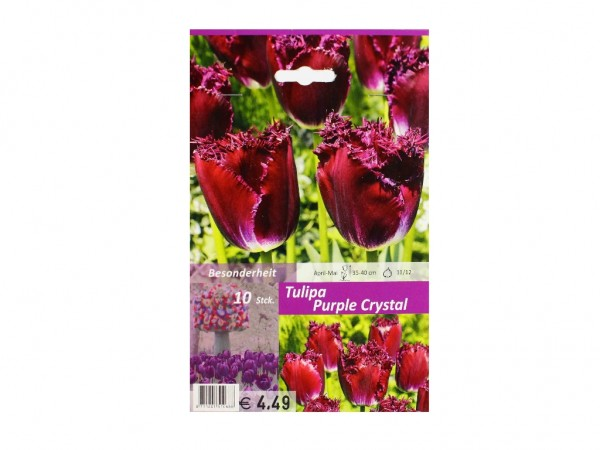 Tulipa Purple Crystal
