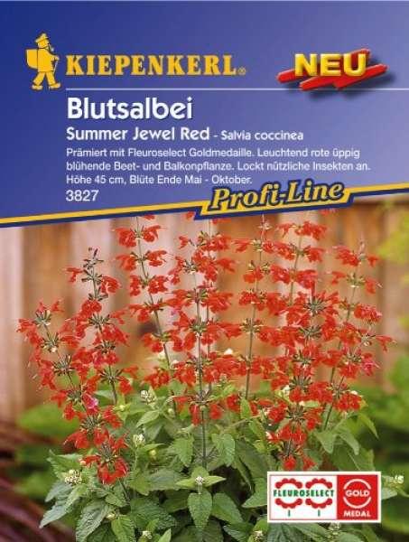 Blutsalb. Summer Jewel R. NE
