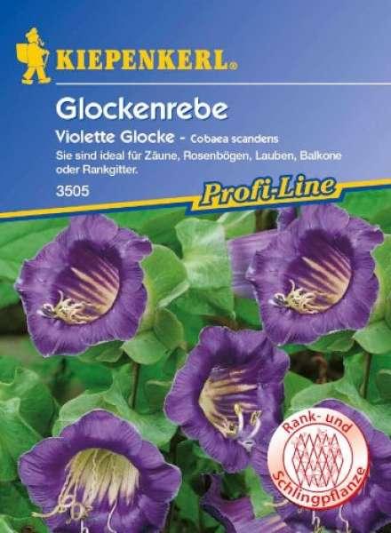 Kiepenkerl Glockenrebe Violette