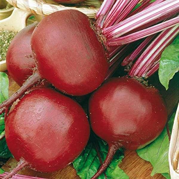 Rote Beete Bolivar BIO