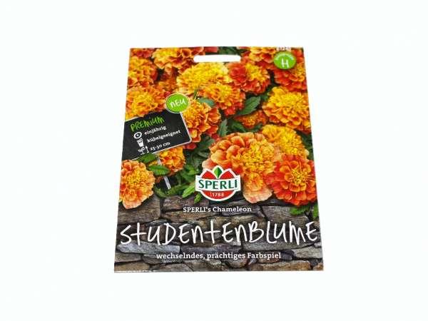 Studentenblume