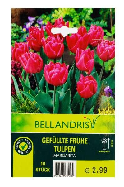Bellandris Gefüllte Frühe Tulpen Pink