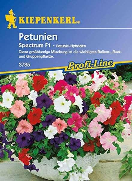 Kiepenkerl Petunien Spectrum F1 - Petunia Hybride