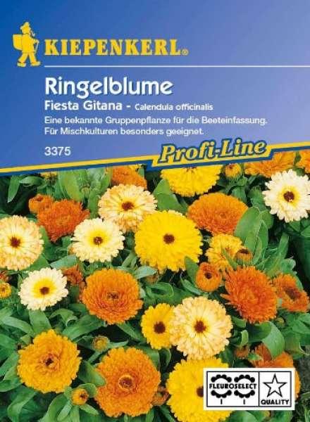 Kiepenkerl Ringelblume Fiesta Gitana