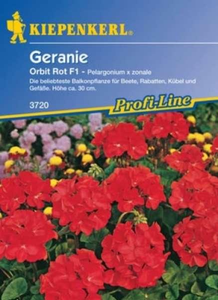 Kiepenkerl Geranie Orbit rot