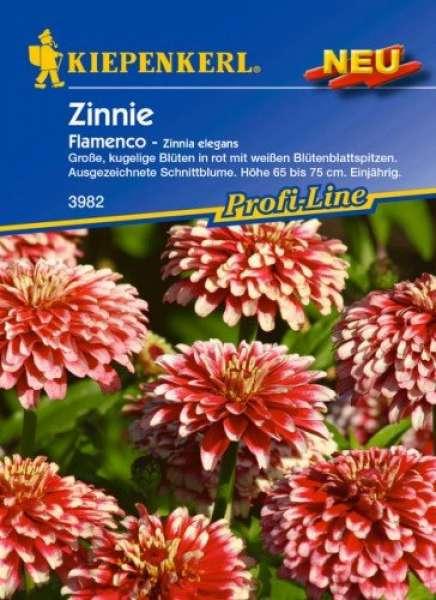 Kiepenkerl Zinnie Flamenco - Zinnia elegans
