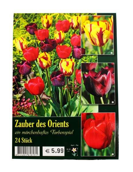 Zauber des Orients Tulpenmischung